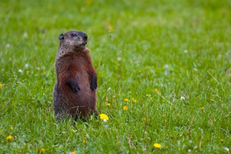 Groundhog Day; a pointless tradition